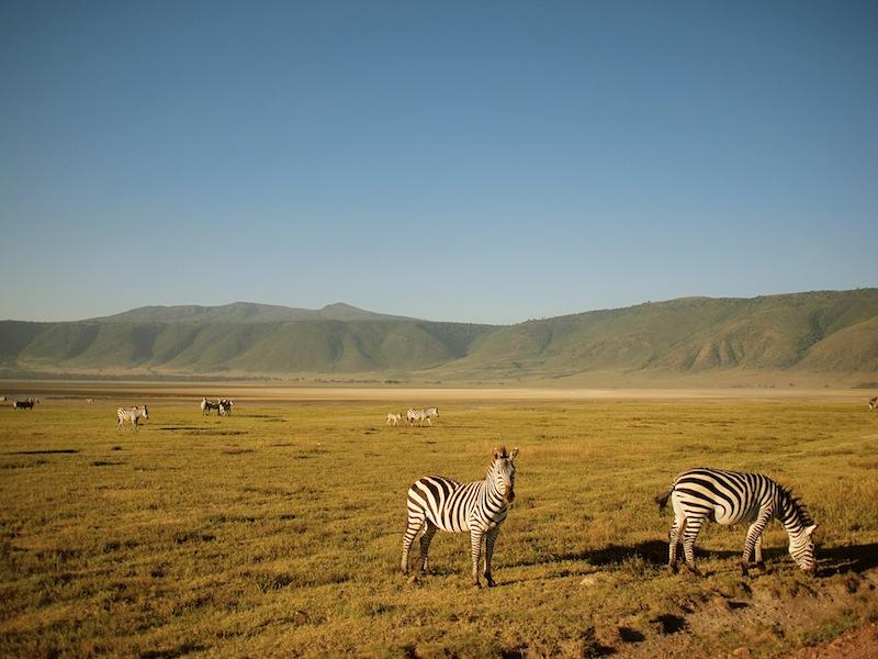 Warm Heart Of Tanzania Lunaguava