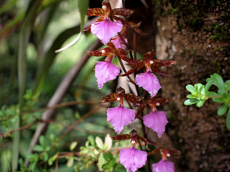 Orquídeas Moxviquil