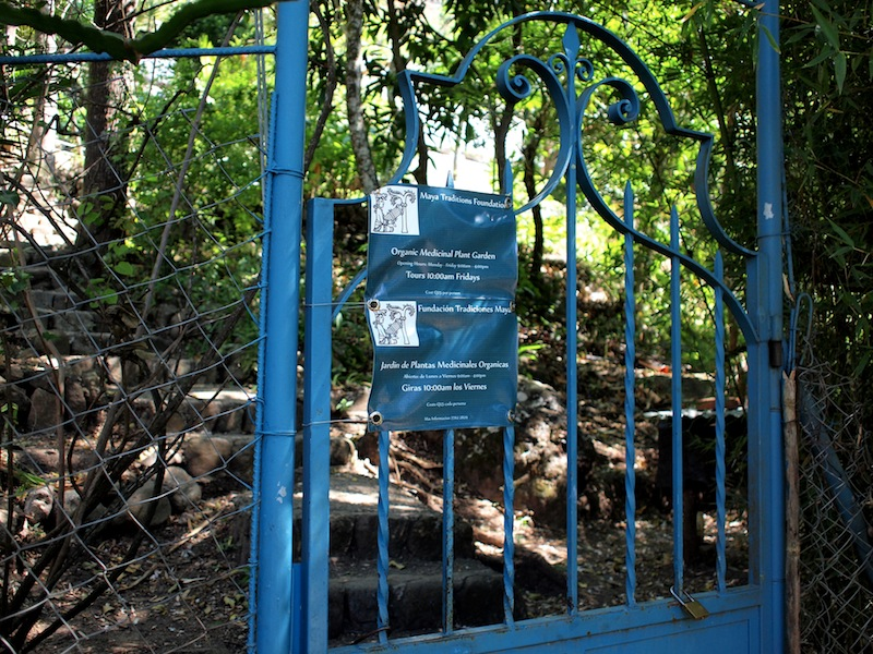 Maya Traditions Medicine Garden
