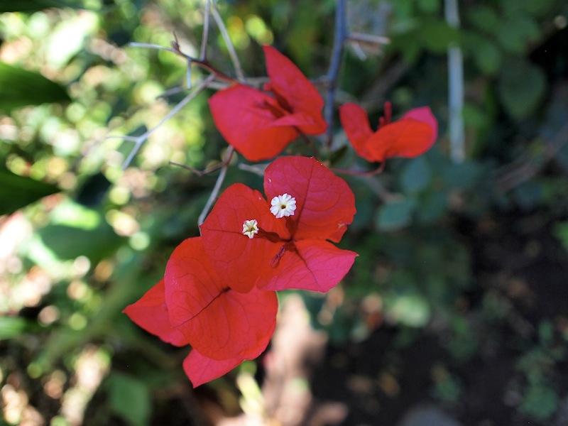 Maya Traditions Herbal Medicine Garden