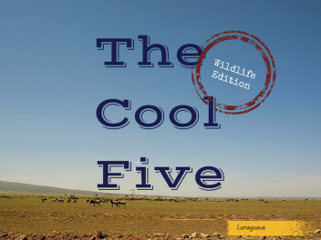The Cool Five Wildlife Edition