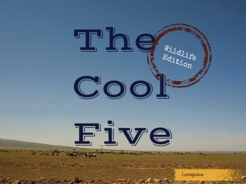 The Cool Five Wildlife Edition Tanzania