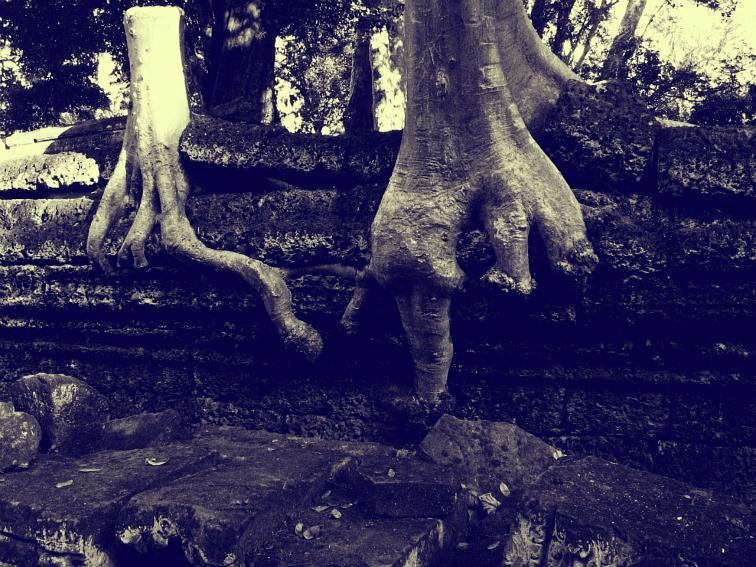 ta prohm angkor wat cambodia tree