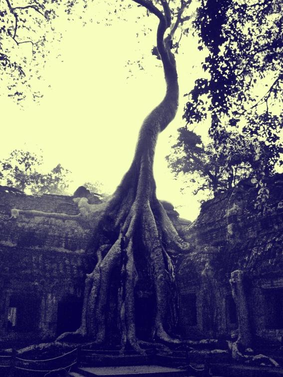 ta prohm cambodia