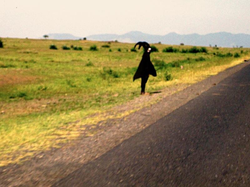 Black ghost Tanzania