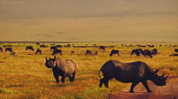 Ngorongoro Black Rhinos Tanzania