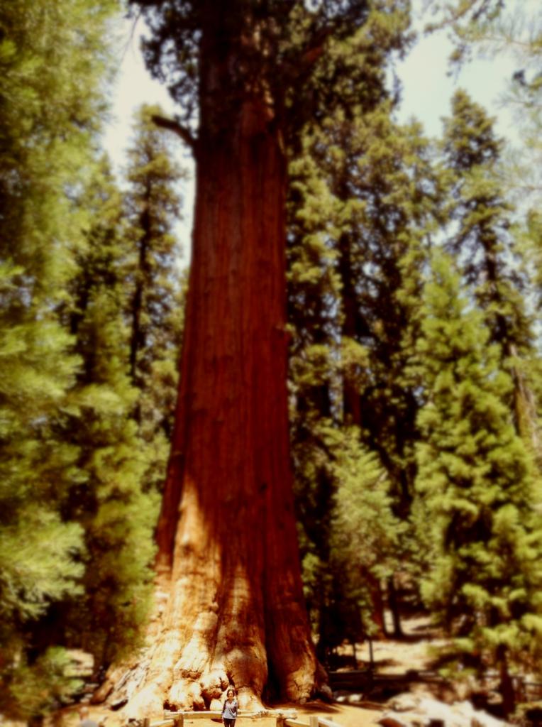 sequoia national park general sherman tree