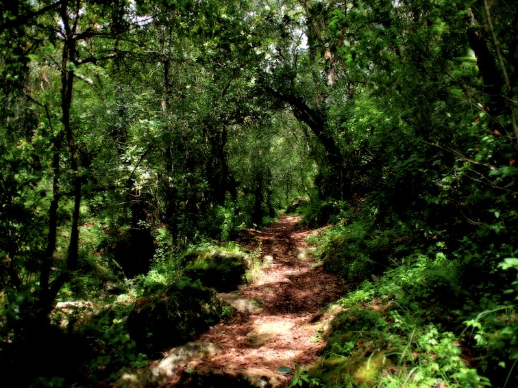 Moxviquil trail