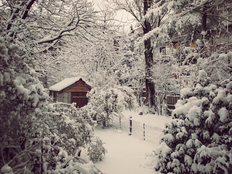 Snow garden Amsterdam