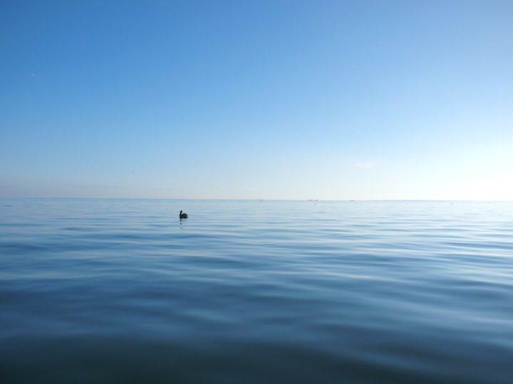 Buoyancy Livingston