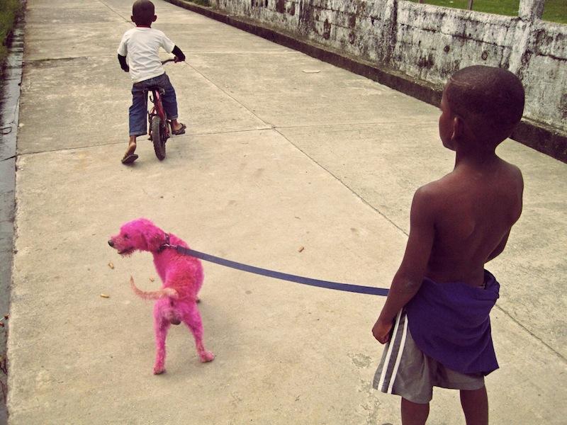 Pink poodle Livingston Guatemala